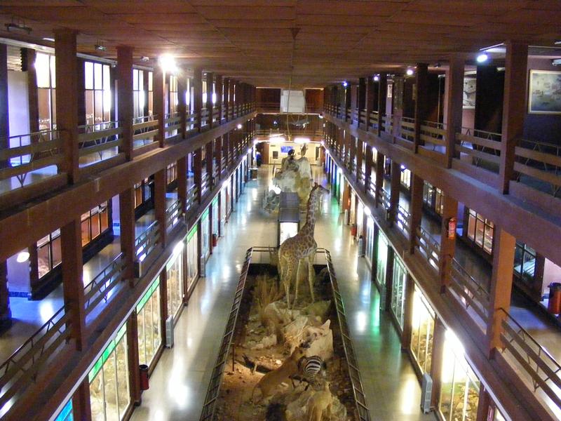 Museo de Ciencias Naturales El Carmen, Onda