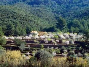Almendros, Desierto de las Palmas, Benicassim